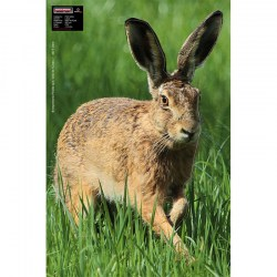 MAXIMAL ANIMAL FACE HARE